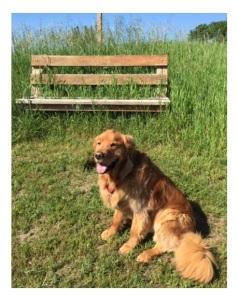 Mulaidh by bench in Shamrock Lane field