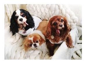 spread softness puppies